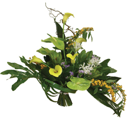 Отдам даром цветы комнатные москва