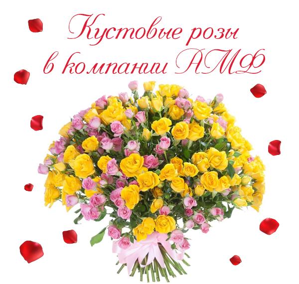 Фото кустовых роз