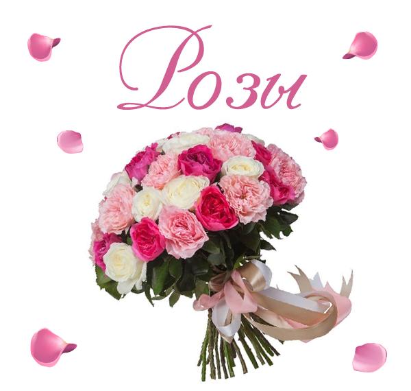 Фото красивых роз