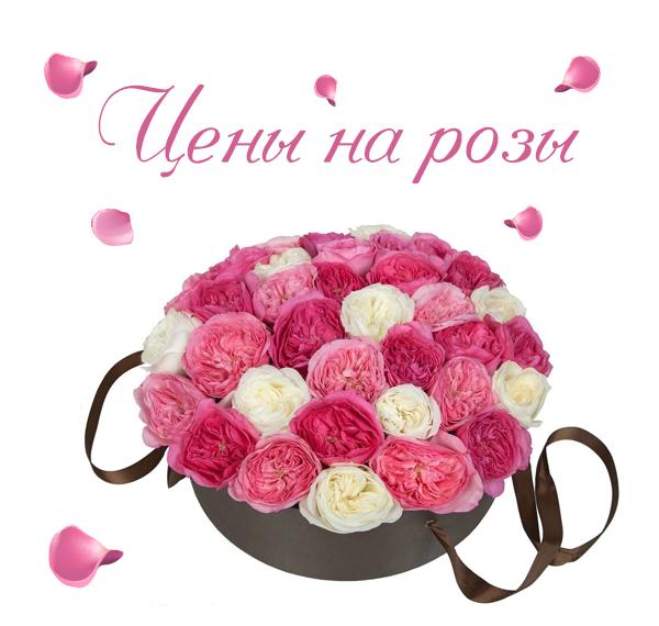 Фото недорогих роз