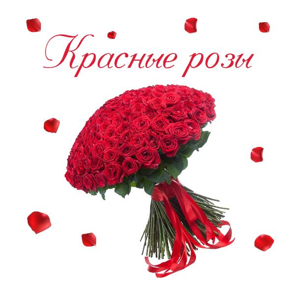 Фото великолепных красных роз от компании AMF