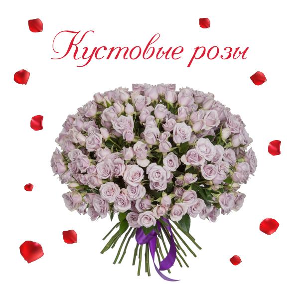 Картинка кустовых роз