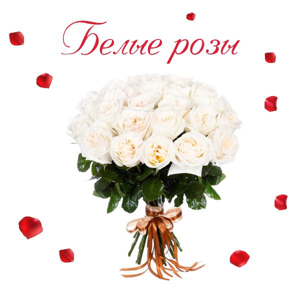 Фото белых роз