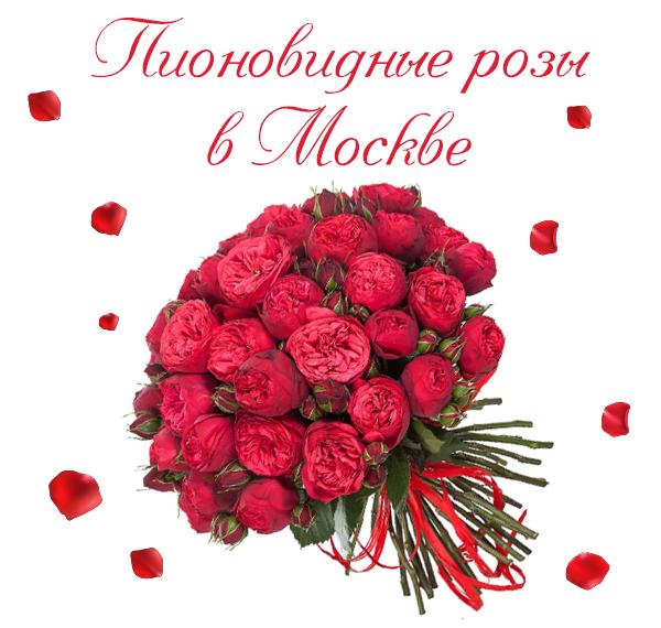 Фото особенных пионовидных роз