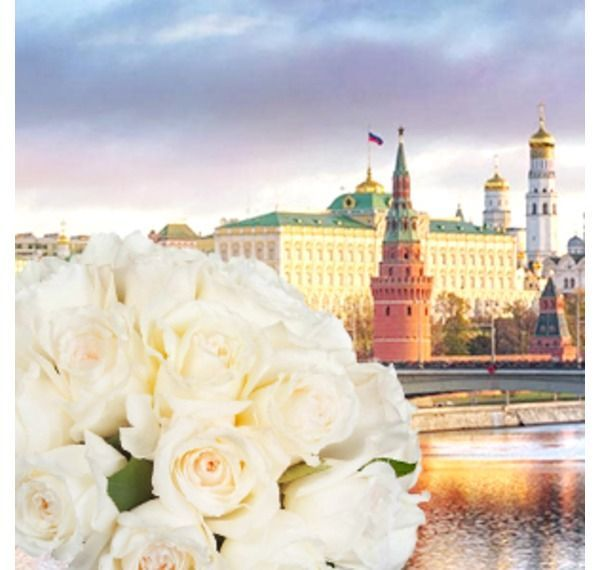 Белые розы фото фото