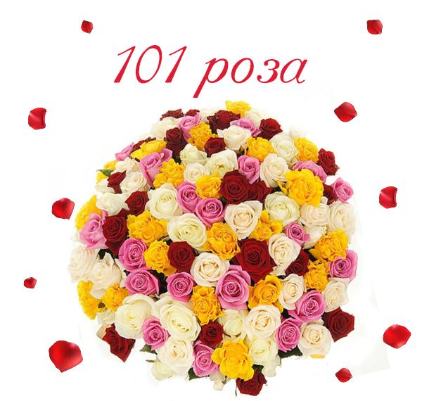 Фото шикарной 101 розы от AMF