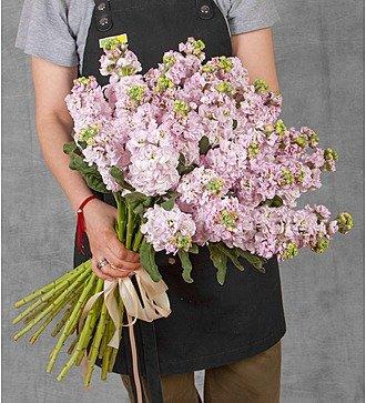 Букет нежно-розовой маттиолы (15, 25 или 51)