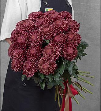 Букет одноголовых хризантем Bigoudi Red (21, 35 или 51)