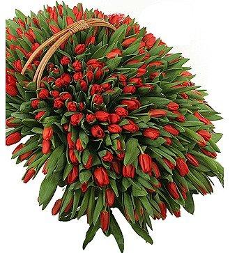 Композиция из 301 красного тюльпана