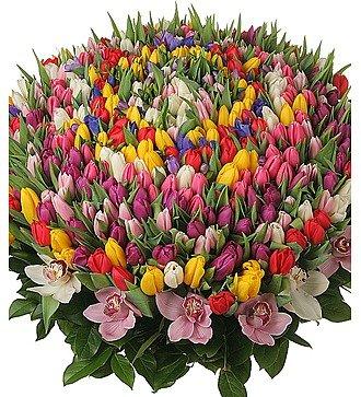 """Композиция из 301 тюльпана """"Счастливая весна"""""""