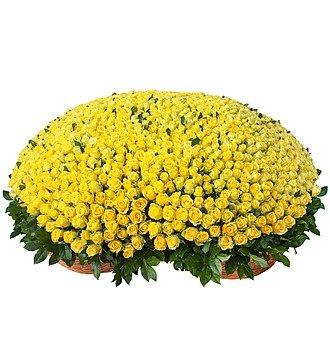"""Композиция из 501 или 1001 желтой розы """"Золото"""""""