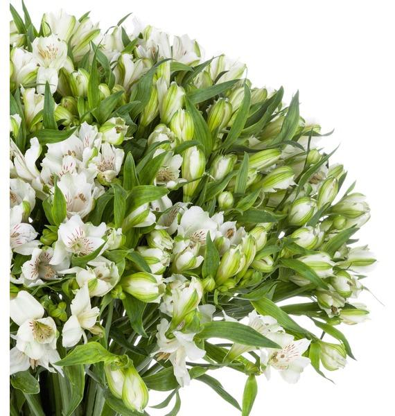 Bouquet Brilliant (25, 51 or 101 alstroemeria) – photo #5