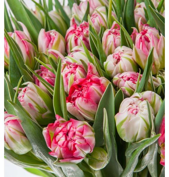 Букет пионовидных тюльпанов Flash Point (25, 51 или 101) – фото № 2
