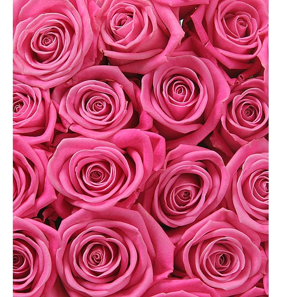 Букет розовых роз Шкала восхищения. Количество роз указываете Вы! серьги telle quelle серьги