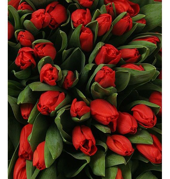 Композиция из 301 красного тюльпана – фото № 5