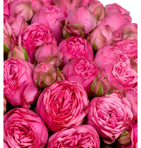 Bouquet of 151 pion-shaped roses Pink Piano – photo #2