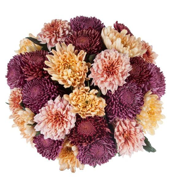 Букет одноголовых хризантем Осенний калейдоскоп (21, 35 или 51) – фото № 3