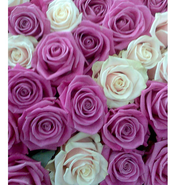 Composition of 1001 Roses You are my life! – photo #3