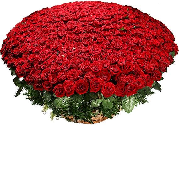 Композиция из 501 розы Гран При Любовь всегда права! – фото № 1