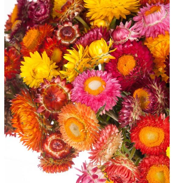 Букет из 101 Helichrysum – фото № 2
