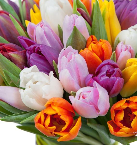 Букет из тюльпанов Краски любви (75 или 101) – фото № 3