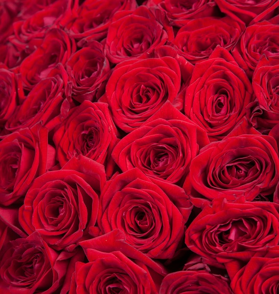 Bouquet of 201 red roses You are my world! – photo #3