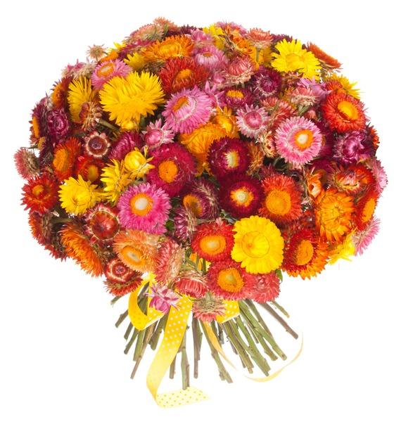 Букет из 101 Helichrysum – фото № 5