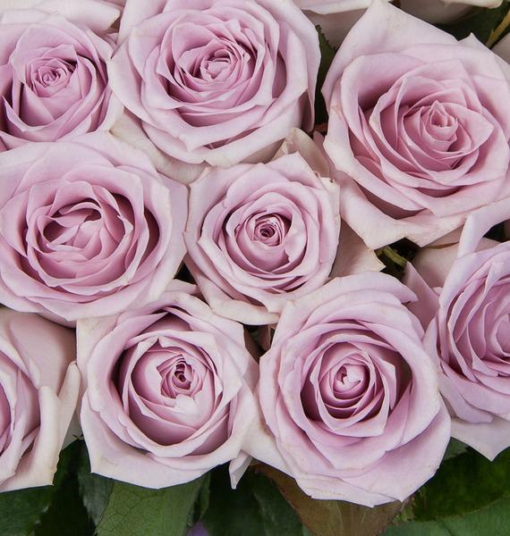 Букет роз Fifth Avenue (25, 51 или 75) – фото № 4