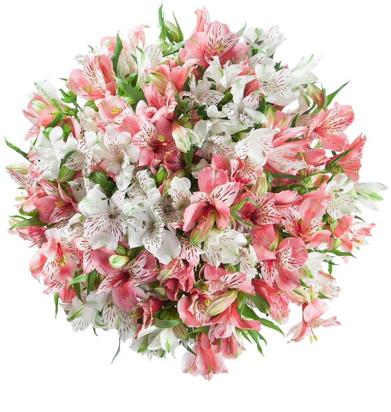 Bouquet of alstroemeria Pearl – photo #4