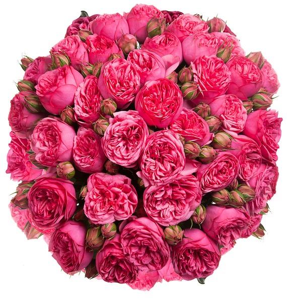 Букет из пионовидных роз Pink Piano (15, 25 или 51) – фото № 5