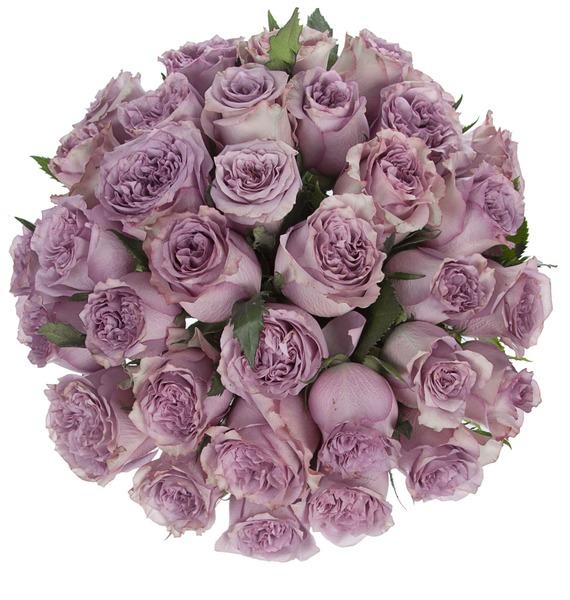 Букет из роз Dolcetto (25, 51 или 101) – фото № 4
