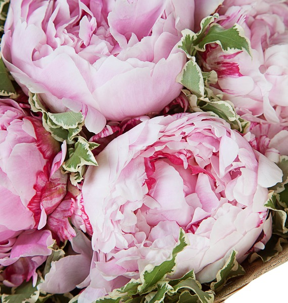 Букет пионов Sarah Bernhardt – фото № 4