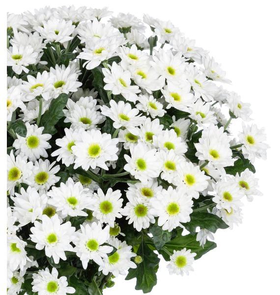 Букет Летний аромат (15,25,51 или 101 хризантема) – фото № 3