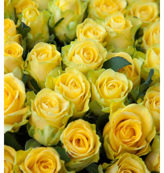 Composition of 501 or 1001 yellow roses Gold – preview #3