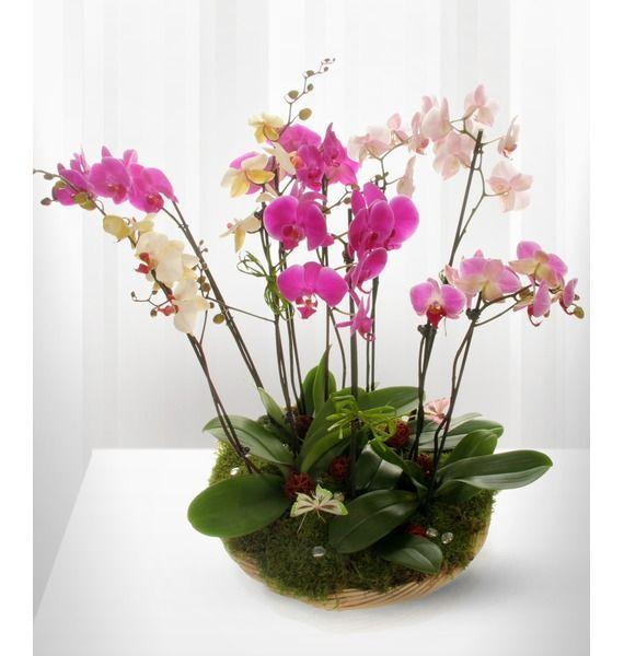 Розмарин поздравление к подарку цветы орхидеи доставкой цветы