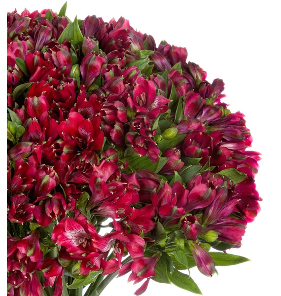 Bouquet Ruby (25, 51 or 101 alstroemeria) – photo #5