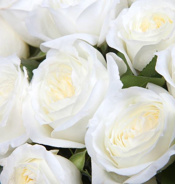 Букет из пионовидных роз Alabaster (15, 25 или 51) – фото № 4