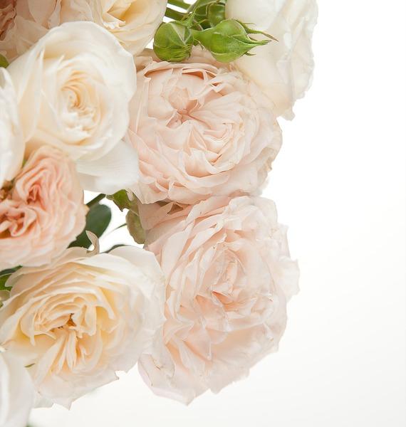 Букет из пионовидных кустовых роз Bombastic – фото № 4