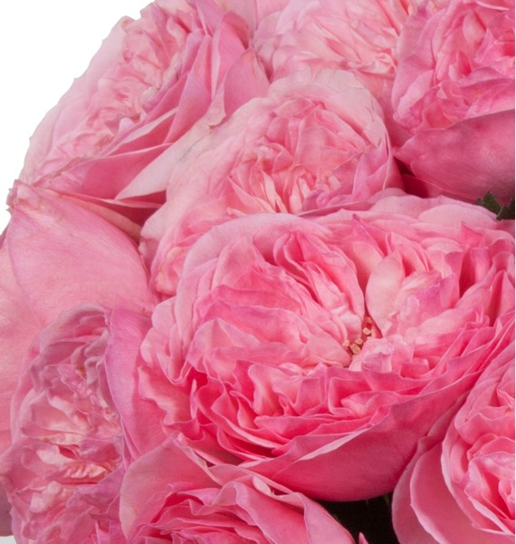 Bouquet of pion-shaped roses Maria Theresia (15, 25 or 51) – photo #4