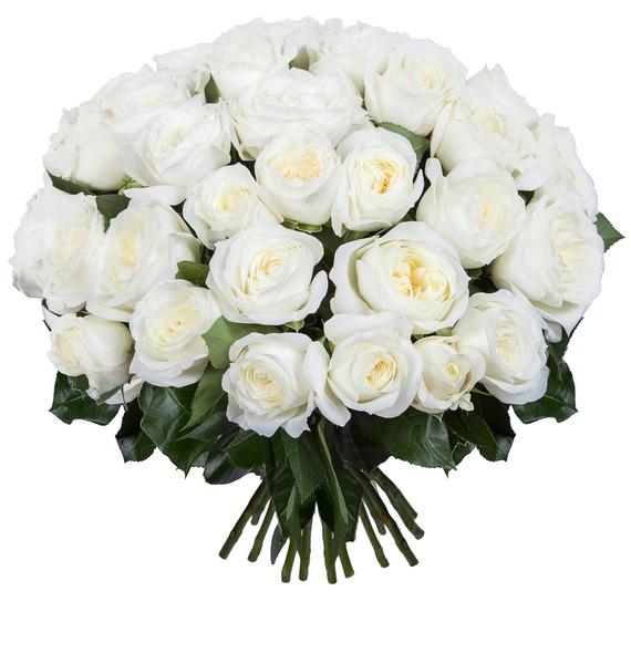 Букет из пионовидных роз Alabaster (15, 25 или 51) – фото № 1