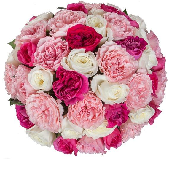 Букет из пионовидных роз Феерия (15, 25 или 51) – фото № 5