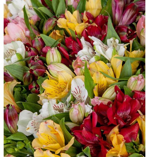 Bouquet Fires (51, 101 or 151 alstroemeria) – photo #5
