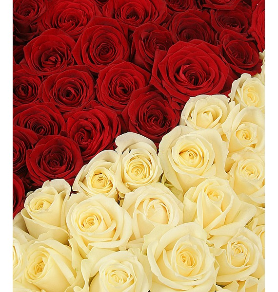 Composition Created to be together (1001 Roses) – photo #5