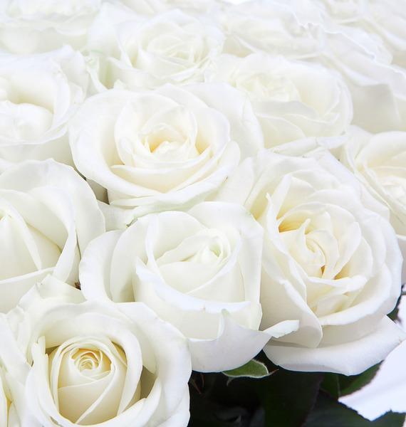 Букет из белых роз (25, 51 или 75) – фото № 3