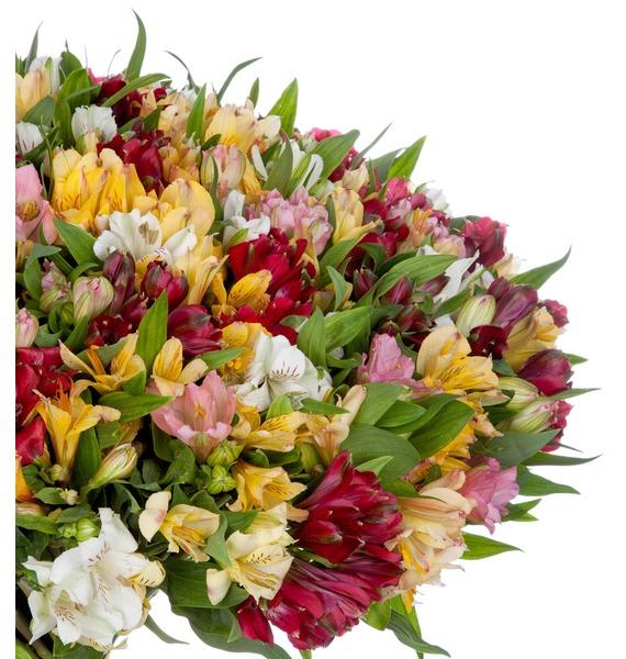 Bouquet Fires (51, 101 or 151 alstroemeria) – photo #4