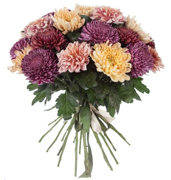 Букет одноголовых хризантем Осенний калейдоскоп (21, 35 или 51) – фото № 4