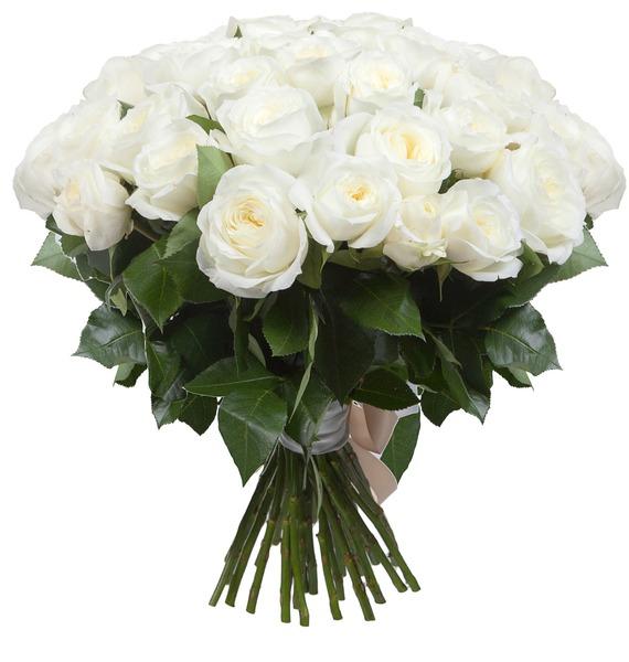 Букет из пионовидных роз Alabaster (15, 25 или 51) – фото № 2