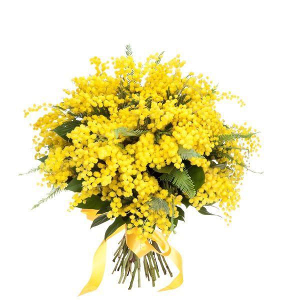 Цветы мимозы купить москва можно ли купить в евроопте в минске цветы