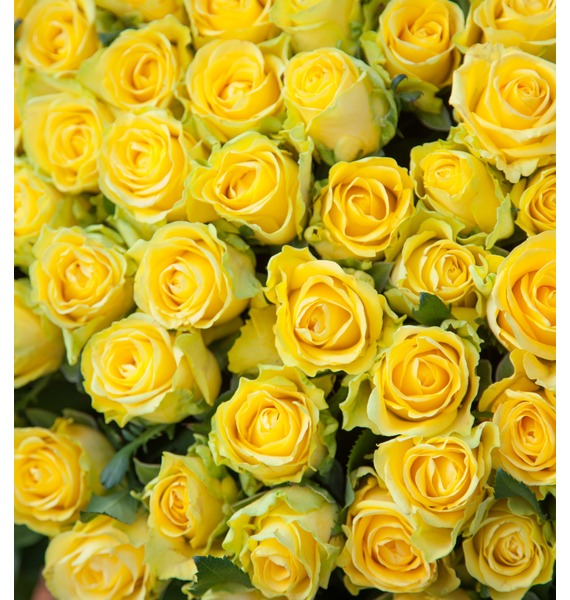Composition of 501 or 1001 yellow roses Gold – photo #2