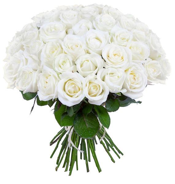 Букет из белых роз (25, 51 или 75) – фото № 1
